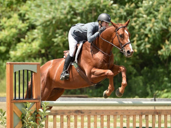 TAPINTO HORSES: New York Thoroughbreds Shine at Vermont Summer Festival