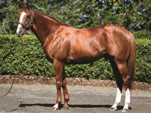 NY Thoroughbred Breeders: Pensioned New York sire Frost Giant set for next career