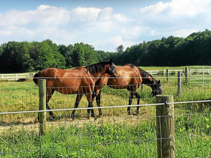 Saratogian: New York State doing the right things to help retired Thoroughbreds