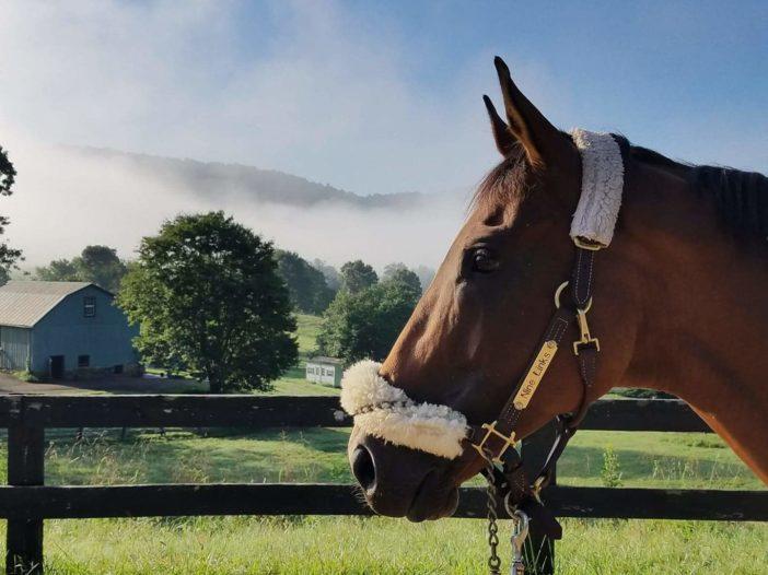 The Plaid Horse: Meet the 2021 Take2 Thoroughbred League Year-End Winners